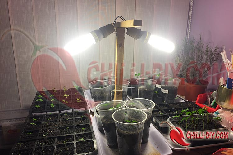 2 ESL Chilianbau Beleuchtung Bild 1