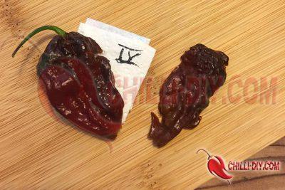 Chilisorte 4 Eigenextrakt Bild