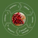 Chilianpflanzen Zeitplan – So klappt der Chilianbau garantiert