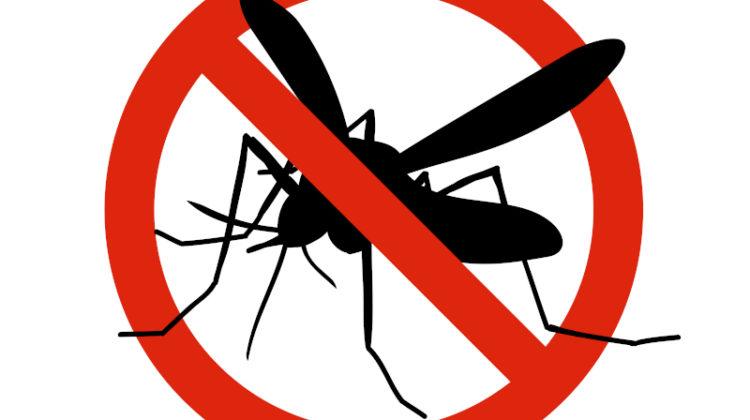 Trauermücken bekämpfen